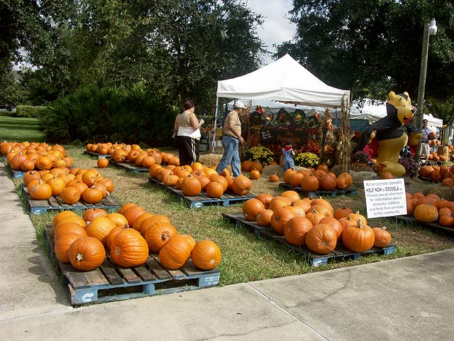 pumpkins at celebration - florida