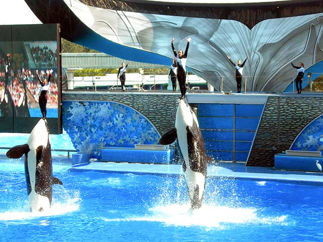 The new show from sea world - florida